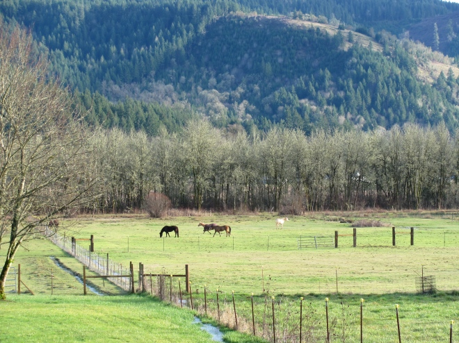Horses and other pastoral scenes are common along Hill Road.