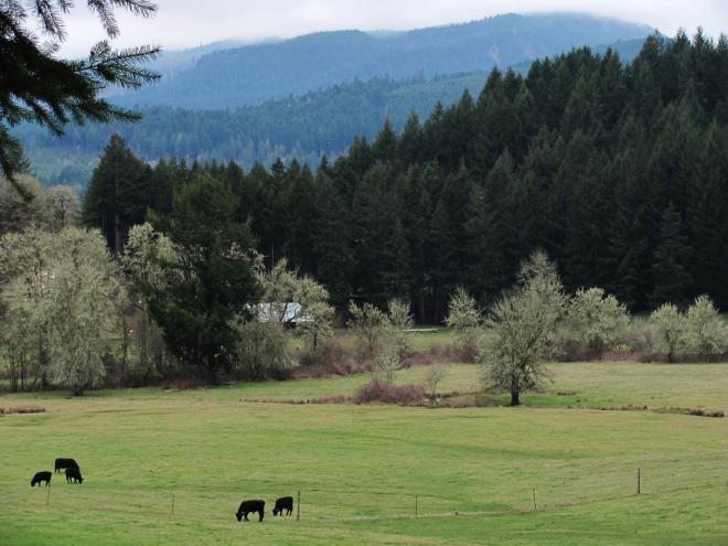 Pastoral views are common along Tree Farm Road.