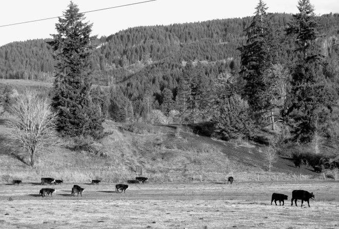 livestock picture in lane county oregon