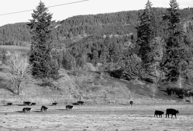 livestock picture in lane county oregon